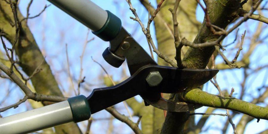 Як правильно зробити обрізку дерев?