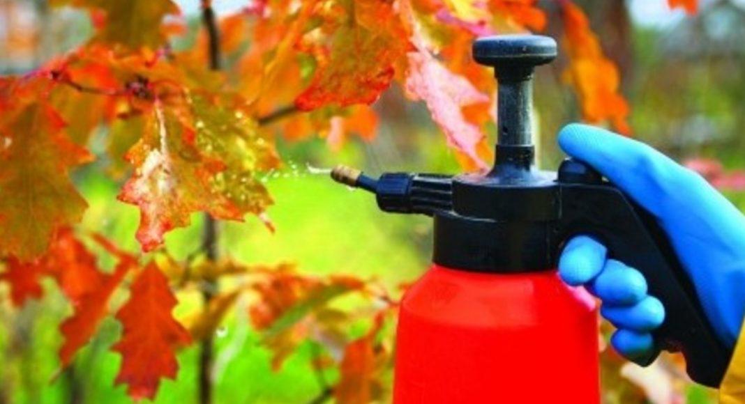 Як обробити сад восени