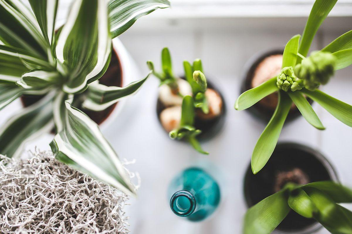 Які рослини не можна тримати в будинку