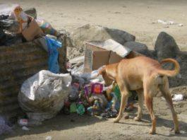 Собака, який врятував дитину