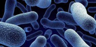 Бактерії, стійкі до антибіотиків