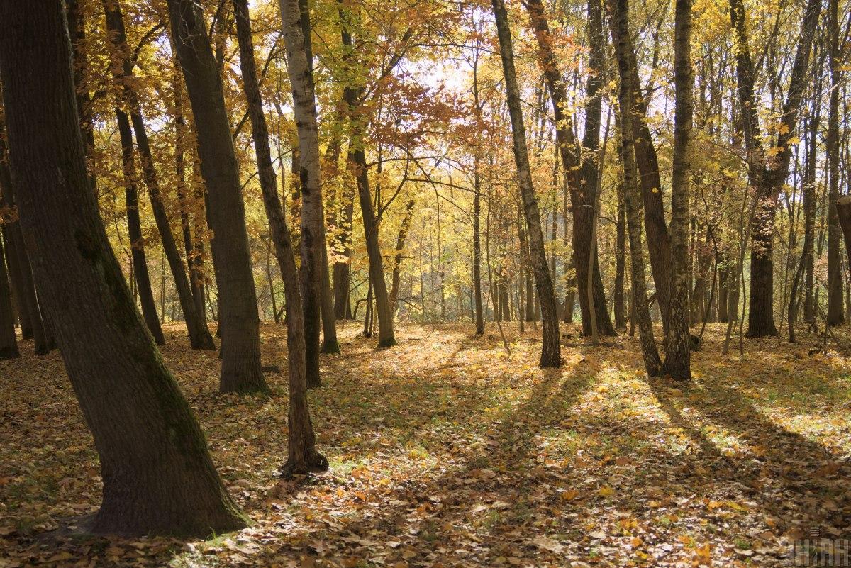 У вихідні - в ліс по гриби