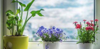 Чому не приживаються рослини