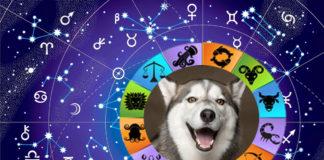 Сумісність собак і знаку Зодіаку