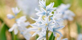 Квіти, які не потребують особливого догляду