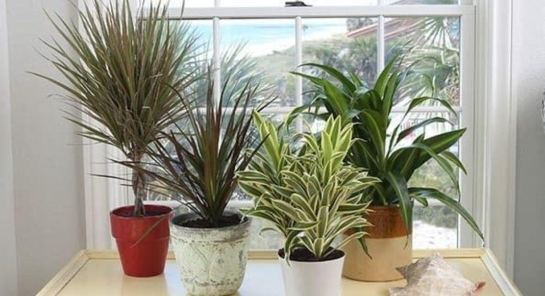 Як врятувати домашні рослини