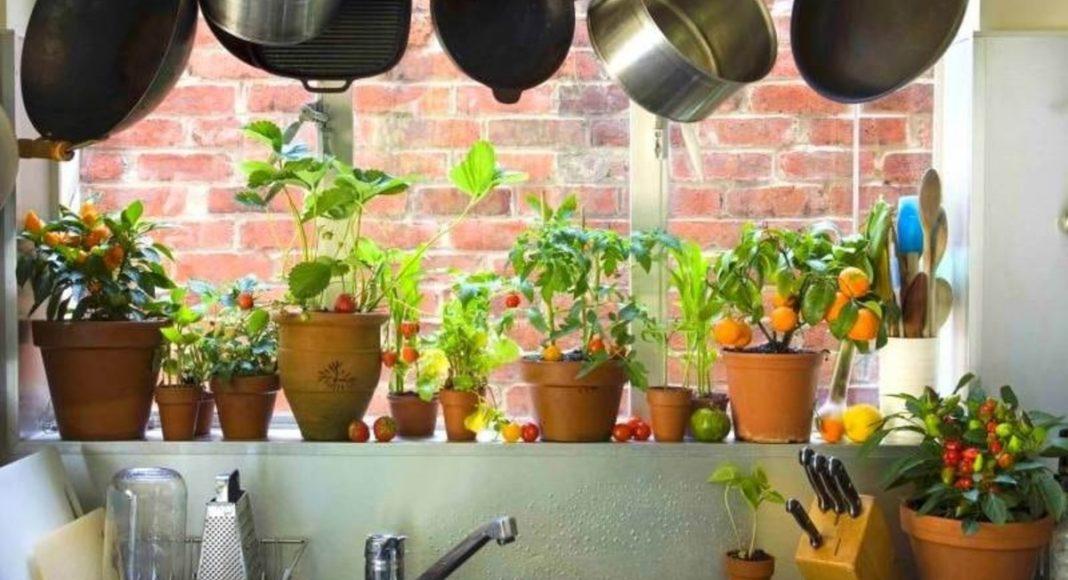 Овочі та фрукти у горщиках