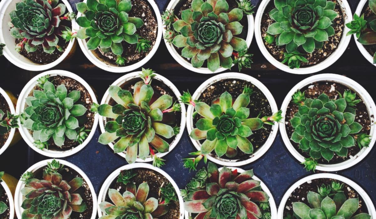 Чому варто завести рослини в дома