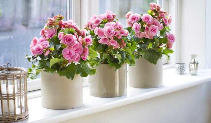 Домашні рослини