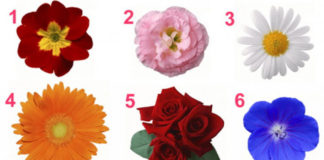 Оберіть квітку і дізнайтесь про що вона розкаже