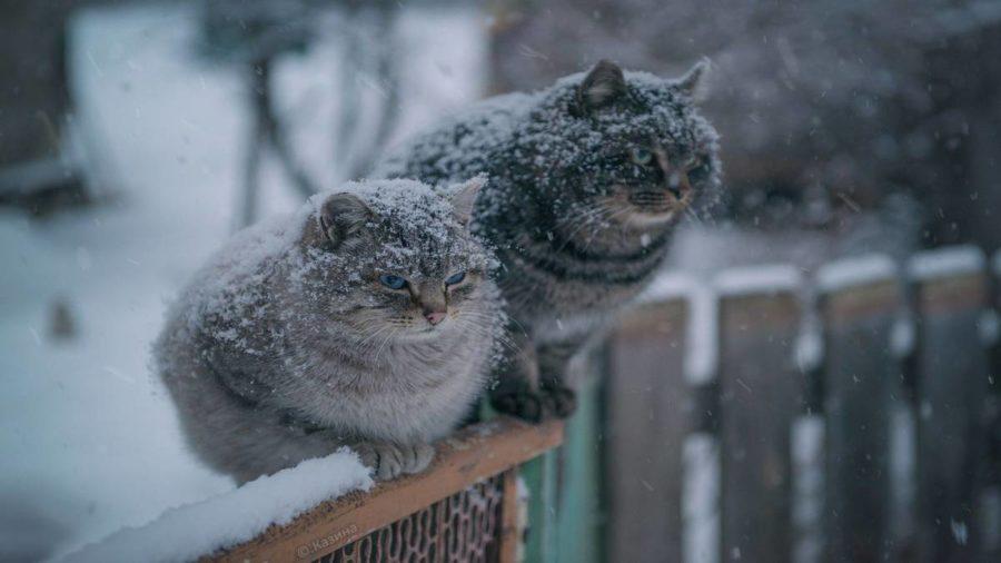 У Карпатах пройде мокрий сніг