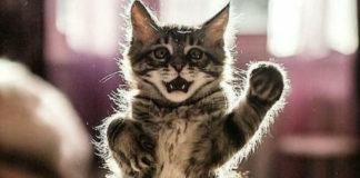 Ну що, кішечки, потанцюємо?