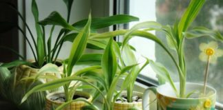 Натуральні добрива для кімнатних рослин, які знаходяться на кухні