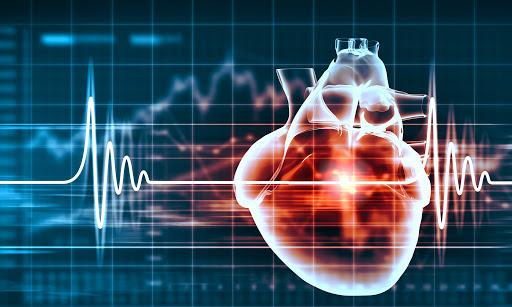 Серце