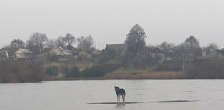 Пес на водоймі