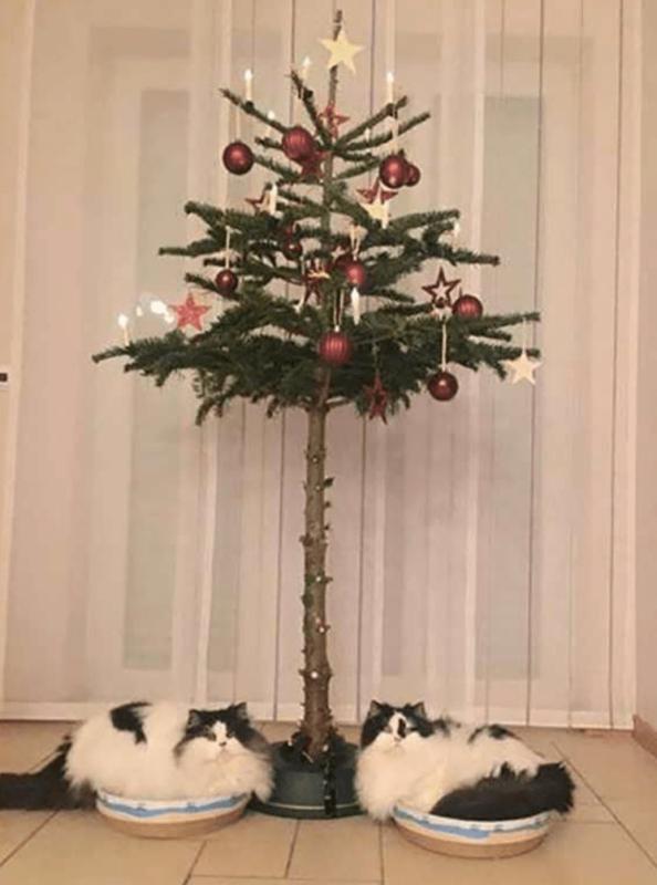 Ялинка для власників котів