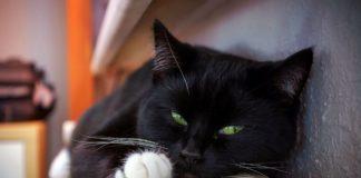 Коти вміють лікувати