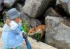 Нові мешканці на пляжі Фонтанки. Фото взяте на просторах мережі.